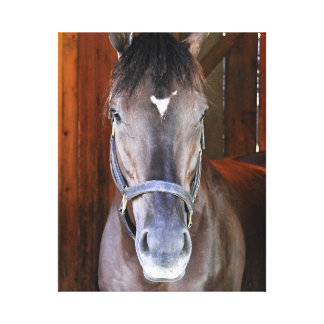 "Champagne Stakes Winner ""Daredevil"" Canvas Print"