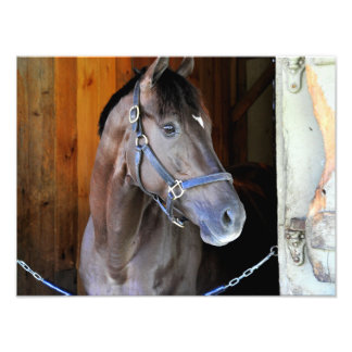 "Champagne Stakes Winner ""Daredevil"" Photo Print"