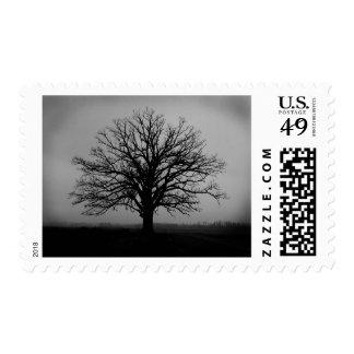Champion Oak Stamp