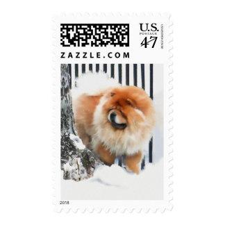 CHANCE heARTdog chow Postage