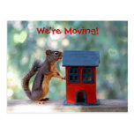 Change of Address Moving Announcement Squirrel Post Cards