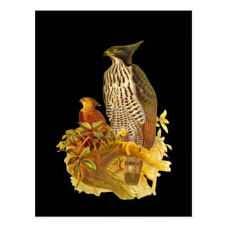 Changeable Hawk Eagle Post Card