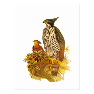 Changeable Hawk Eagle Post Cards