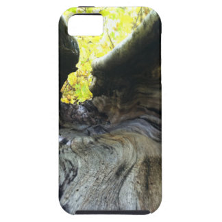 Changing Leaves iPhone 5 Covers