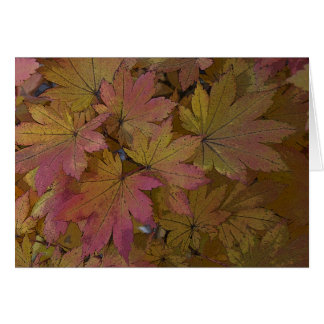 Changing Maple Leaves Greeting Card