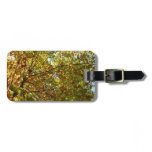 Changing Maple Tree Green and Gold Autumn Luggage Tag