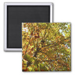 Changing Maple Tree Green and Gold Autumn Magnet