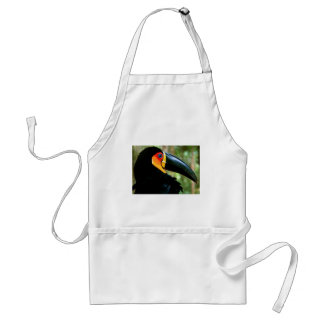 Channel-billed Toucan. Apron