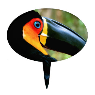 Channel-billed Toucan. Cake Topper