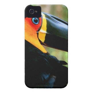 Channel-billed Toucan. iPhone 4 Case-Mate Case