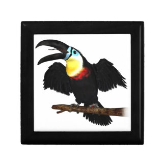 Channel-Billed Toucan Jewelry Boxes