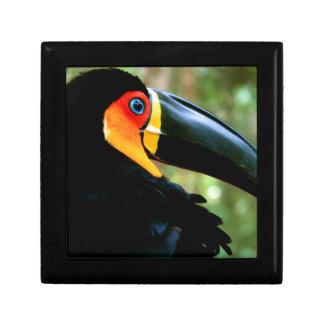 Channel-billed Toucan. Trinket Box