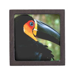 Channel-billed Toucan. Premium Trinket Box