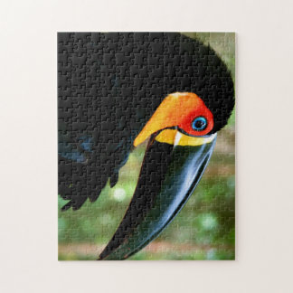 Channel-billed Toucan. Puzzle