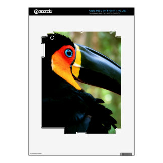 Channel-billed Toucan. iPad 3 Decal