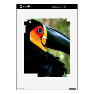 Channel-billed Toucan. Skins For The iPad 2