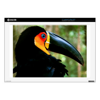 Channel-billed Toucan. Skin For Laptop