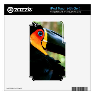 Channel-billed Toucan. Skin For iPod Touch 4G