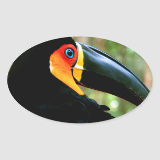 Channel-billed Toucan. Oval Stickers