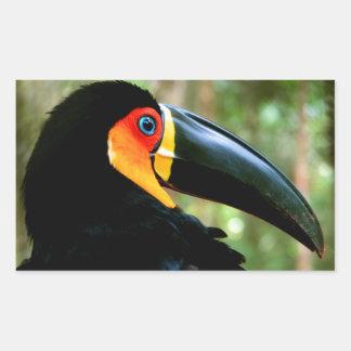 Channel-billed Toucan. Sticker