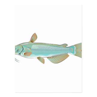 Channel catfish game fish farm fish seafood market postcard