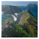 Channel Islands National Park, Southern Tiles