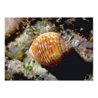 Channeled tun (Tonna cepa) Shell 5x7 Paper Invitation Card