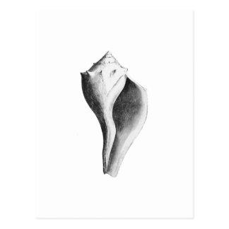 Channeled Whelk (line art) Postcard