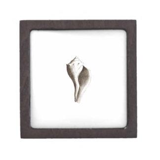 Channeled Whelk (line art) Premium Jewelry Box