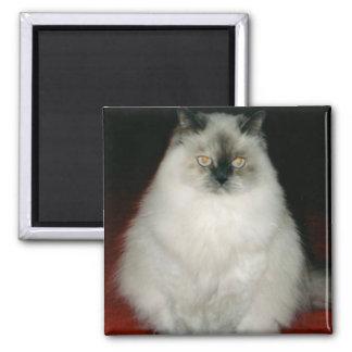 Chantal el imán del gato