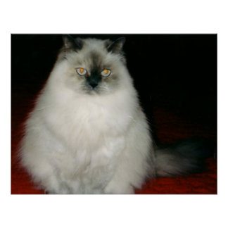 Chantal the Cat Poster