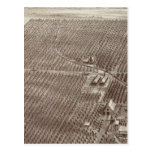 Chapin Fruit Ranch Post Card