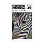 Chapman's Zebra Stamps
