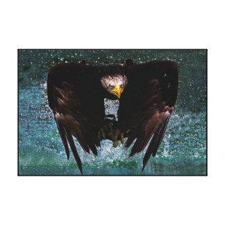 Chapoteo de Eagle calvo envuelto Lienzo Envuelto Para Galerias