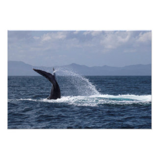 Chapoteo de la cola de la ballena jorobada fotografía