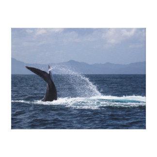 Chapoteo de la cola de la ballena jorobada impresión en lienzo estirada