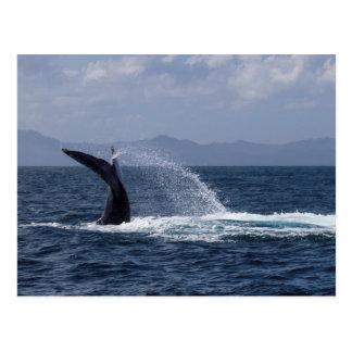 Chapoteo de la cola de la ballena jorobada postales