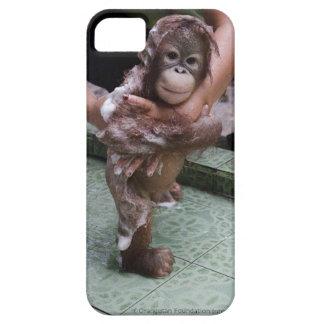 Chaqueta huérfana OFI del orangután iPhone 5 Carcasa