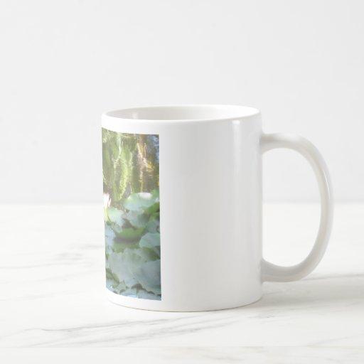 Charca del lirio de agua taza básica blanca