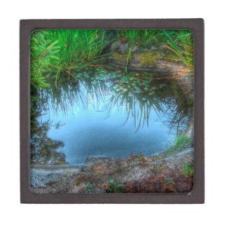 Charca del lirio de la reserva de naturaleza caja de recuerdo de calidad