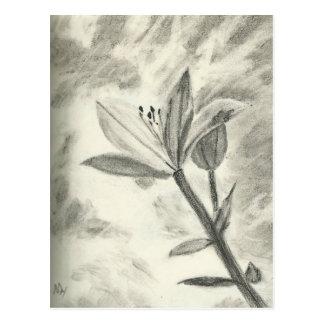 Charcoal Flower Postcard