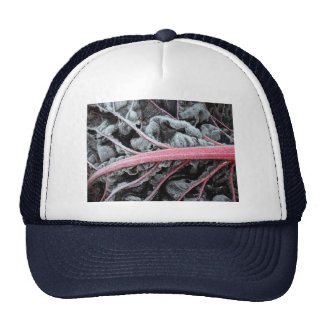 chard Encrusted with Frost, photograph Trucker Hat