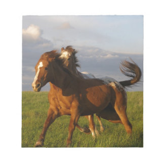 charging horses notepad