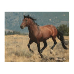 Charging Stallion Caesar on wood wall print