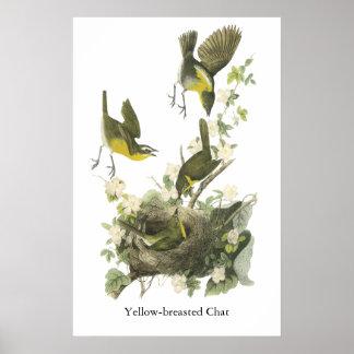 Charla Amarilla-breasted de Audubon Impresiones