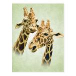 Charla de la jirafa tarjetas postales