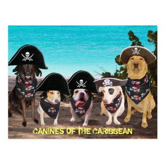 Charla divertida de los perros como las postales