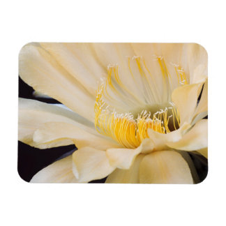 Charlemagne Echinopsis in bloom Magnet
