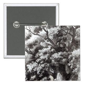 Charles II  Hidden in the Oak Tree Button