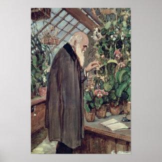 Charles Roberto Darwin Póster
